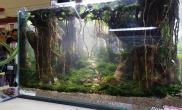 60CM远古森林作品造景水草沉木杜鹃根