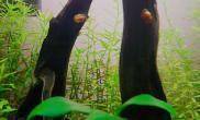 【深绿水景】平凡的小鱼