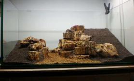 水草造景之木化石的运用