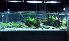 1图片8米缸建缸一个月拍照留念鱼缸水族箱大家给点意见鱼缸水族箱