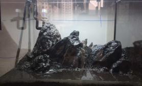 翻缸喽鱼缸水族箱