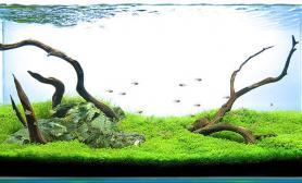 水草缸造景沉木水草泥化妆砂青龙石120CM尺寸设计40