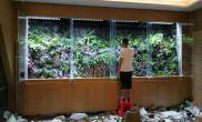 梧州侯成铭雨林生态缸案例 大型雨林生态造景工程