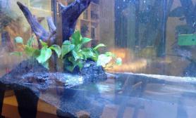 水草造景新手改造了个水陆缸