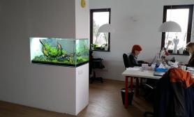 沉木青龙石造景缸与办公空间装饰装修