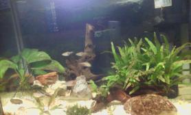 各位大侠我的鱼缸想种好草水草缸请给点意见沉木杜鹃根青龙石水草泥