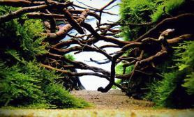 树桩杜鹃根青龙石水草造景(150CM及以上)草缸鱼缸