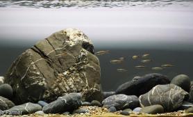 造景之路水草缸造景原生态鱼缸13