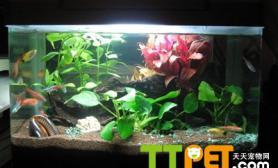 怎么搭配鱼缸中的灯管