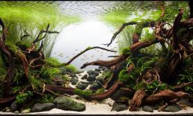 水草造景120CM青龙石沉木景