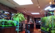 国外水族店水草缸造景NaturalAquariumShop