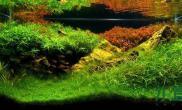 【转载】主要看层次感水草缸由远到近沉木杜鹃根青龙石水草泥