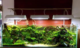 120CM水草缸杜鹃根MOSS莫斯小三角珊瑚造景沉木绍兴尚品