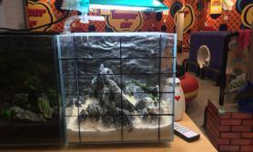青龙石30小缸鱼缸水族箱