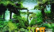 有效防止鱼缸藻类滋生的方法