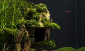 水族箱造景魔法女巫的小屋