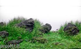 水草缸造景沉木水草泥化妆砂青龙石120CM尺寸设计58