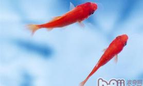 冬季购买金鱼的注意事项