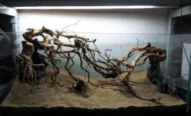 2013 ADA 72名 《无题》水草缸建缸过程