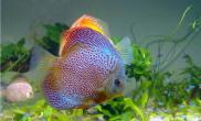 如何保持鱼草混养的环境平衡
