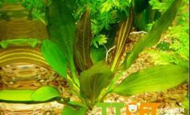 方法鱼缸绿藻怎么去除