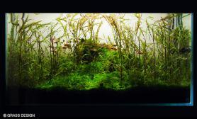 沉木青龙石水草造景90CM尺寸设计57