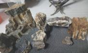 木化石种植~~~问题