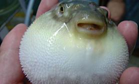 鱼儿拒食的简单处理方法