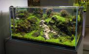 90CM火山石鱼缸水草造景