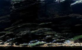 沉木青龙石原生态鱼缸10