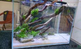 水草造景45超白缸沉木双面造景缸