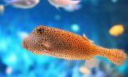 生病宠物鱼的护理方法(图)