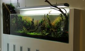 水草缸造景沉木水草泥化妆砂青龙石150CM及以上尺寸设计58