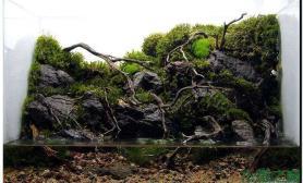 迷你水草造景缸
