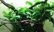 鱼缸藻类有效的清除方法