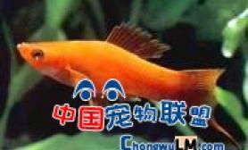 N种热带观赏鱼的相貌繁殖方法介绍(一)