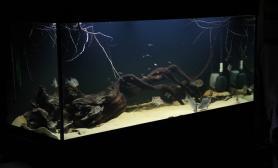 沉木青龙石原生态鱼缸02