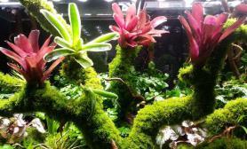 经济靓丽的雨林缸造景