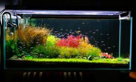 建议开设一个荷兰景专栏鱼缸水族箱