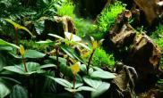 水陆缸45CM森林水景案例
