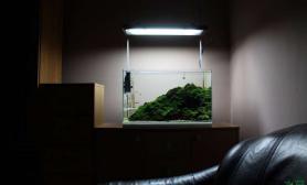 纯莫丝造景水草缸24K 纯的鱼缸水族箱