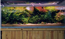 国内水族店水草缸造景浙江绍兴尺寸设计尚品水森林之五
