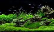 水草缸的过滤