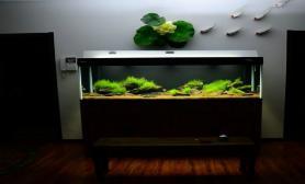沉木青龙石原生态鱼缸31