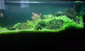 水草造景作品:水草造景(120cm)-18
