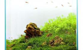 清新到爆的小草缸水草缸来看看吧