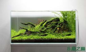 水族箱造景水草缸造景过程
