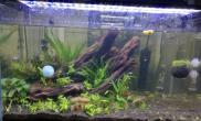 关于黑壳虾吃水草的问题