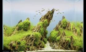 小缸的大气势之作-飞涌于天际曼舞于山崖
