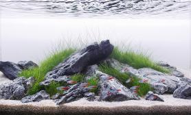 人物专访水草缸造景GeorgeFarmer
